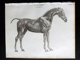 Rees 1820 Antique Print. Anatomy of the Horse after George Stubbs 02